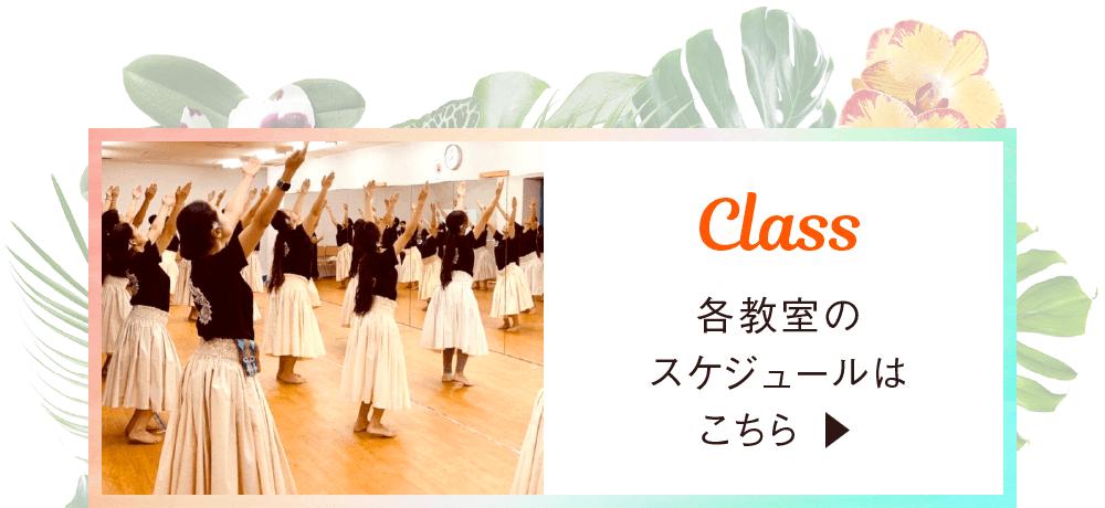 各教室のスケジュールはこちら|東京・茨城のフラダンス・タヒチアンダンス教室|ヘレヒアポリネシアンダンススタジオ|